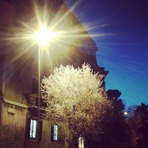 gli alberi bianchi di via ticino